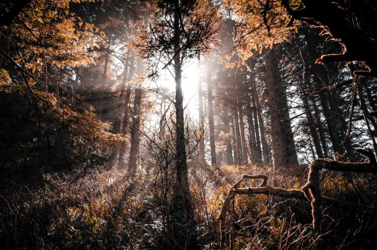 Tree silhouette in dark forest