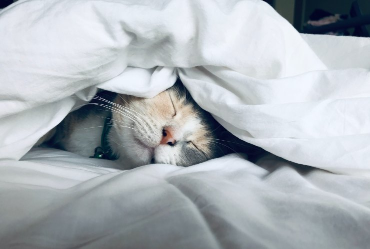 Cat sleeping in bed under the covers